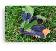 A Multi-colored Leaf Canvas Print