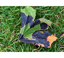 A Multi-colored Leaf Photographic Print