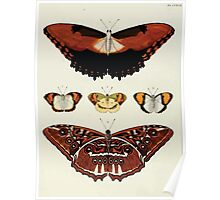 Exotic butterflies of the three parts of the world Pieter Cramer and Caspar Stoll 1782 V3 0098 Poster