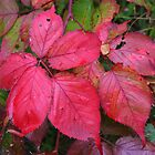 Leaves in Red by Laurel Talabere