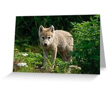 Arctic Wolf Pup - Update Greeting Card