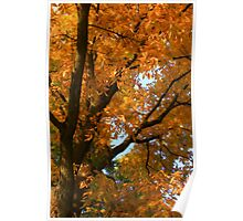 Fall's Finery Poster