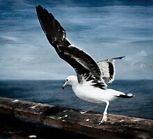 Birds of Venice Beach by Billy Wand