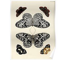 Exotic butterflies of the three parts of the world Pieter Cramer and Caspar Stoll 1782 V3 0010 Poster
