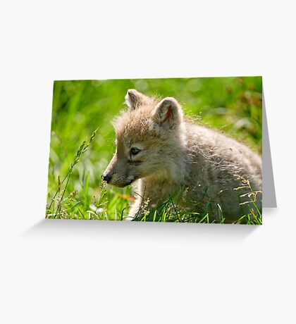 Just smelling the flowers _ Arctic Wolf Pup Greeting Card