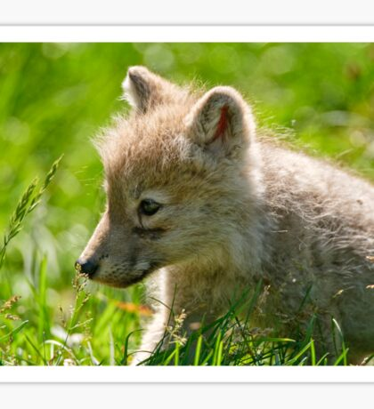 Just smelling the flowers _ Arctic Wolf Pup Sticker