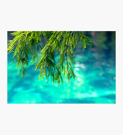 Cypress Leaves Photographic Print