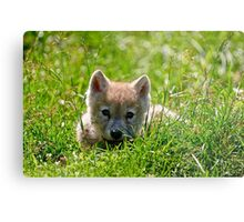 If they could only stay so young - Arctic Wolf Pup Metal Print
