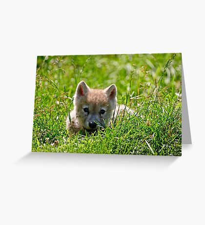 If they could only stay so young - Arctic Wolf Pup Greeting Card