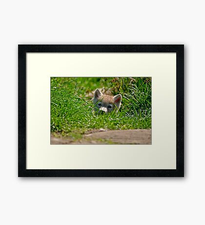 Who Me?? Arctic Wolf Pup Framed Print
