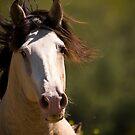 Stallion by Sue Ratcliffe