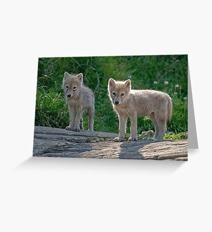 Arctic Wolf Pups  Greeting Card
