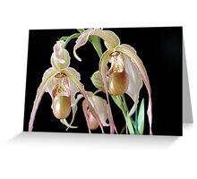 Phragmipedium (Phrag.) grande Greeting Card