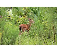 Wekiwa State Park August Fawn Photographic Print