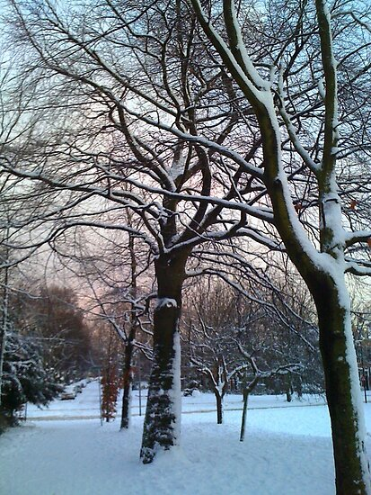 Snow covered trees by Stephanie Owen