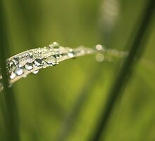Raindrops on Tender Grass by Kelly Chiara