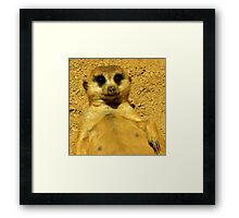 Cute And Playful ! Framed Print