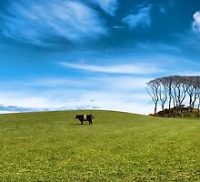 Two moo coos by hagulstad