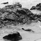 Egret On The Beach by Chet  King