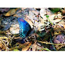 Blue Bombshell Photographic Print