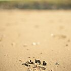 Pawsteps in the Sand by Leanne Graham