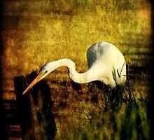 Bayou Hunt by Jonicool