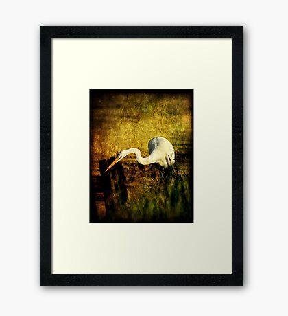 Bayou Hunt Framed Print