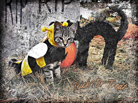 Trick~Or~Treat by Shelly Harris
