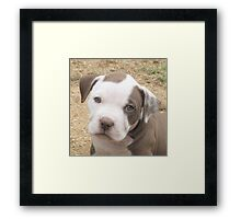 I'm Cute From The Front Too!  Framed Print