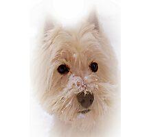 The Scottie Dog.  Photographic Print