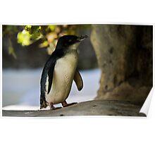 Pingu Poster