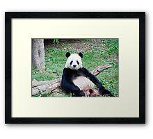 Giant Panda Resting Framed Print