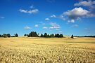 Wheat Field by Martins Blumbergs