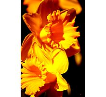 Fleurs Abstract 10 Photographic Print