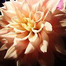 Portrait of a flower by DearMsWildOne