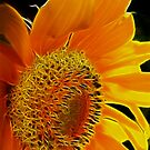 Fractalius Sunflower I by B.L. Thorvilson