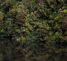 Forest Reflections by Brendon Doran