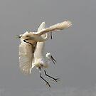 Egret  by sandmartin