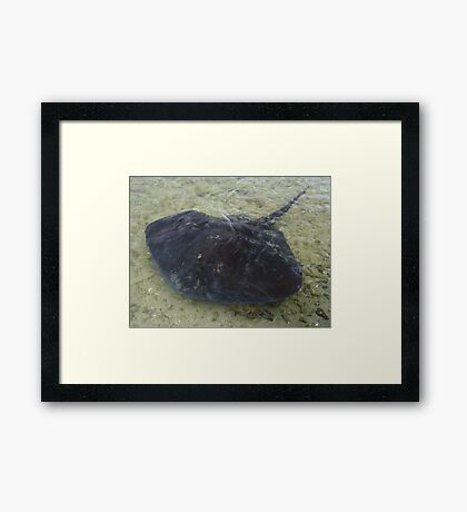 say hello to Ray Framed Print