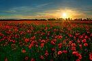 Poppy Field by Martins Blumbergs