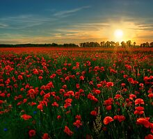 Poppy Field by Martins Blumbergs