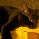 my little kitten boo by catnip addict manor