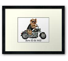 Yorkie Biker Framed Print