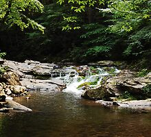 Summer Stream by Shane Jones