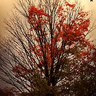 autumn goodbyes by janetlee