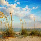 Sea Oats along the Beach by Jonicool
