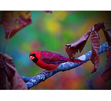 """""""First Hint Of Fall Color"""" Photographic Print"""
