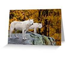 Arctic Wolves On Rocks Greeting Card