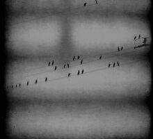 the birds by leapdaybride