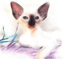 Chocolate Point Kitten. by Siamesecat